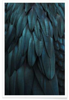 Dark Feathers als Premium poster door Monika Strigel | JUNIQE