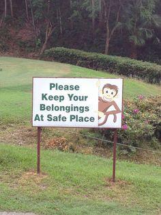 Monkeys all around