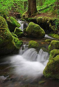 Along the Silver Falls Trail, Oregon Photo Credit- Joseph Thomas Campisi