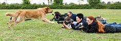 tierfotografie - Google-Suche Workshop, Tier Fotos, Dogs, Animals, Google, Inspiration, Reflex Camera, Animal Photography, Image Editing