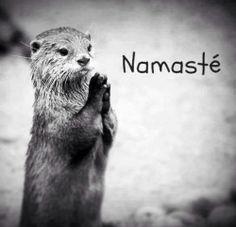 Namastê! O Deus que habita em mim saúda o Deus que habita em você
