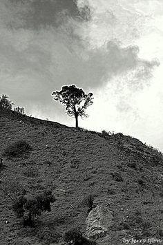 Lonely Tree by FerryTjan