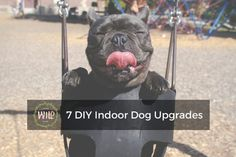 7 DIY Indoor Dog Upgrades