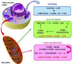 como cambiar el metabolismo para adelgazar en el cuerpo humano