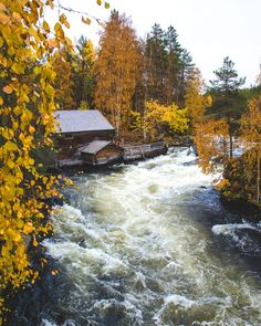 A public rest cabin in Karhunkierros trail during yellow autumn leaves in Oulanka National Park. Lapland, Finland. #Finland