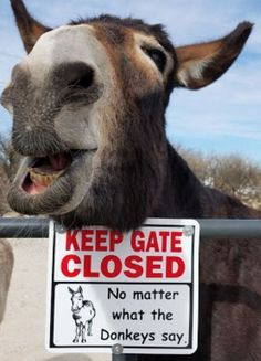 18 Hilarious Funny Donkey Memes For a Perfect Day - Animal World Donkey Funny, Donkey Donkey, Baby Donkey, Cute Donkey, Mini Donkey, Baby Cows, Baby Elephants, Cute Funny Animals, Funny Animal Pictures