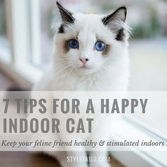 "How to keep indoor cats happy and stimulated ❥ڿڰۣ--❥ڿڰۣ--Thanks, Pinterest Pinners, for stopping by, viewing, re-pinning, & following my boards. Have a beautiful day! ❁❁❁ and""Feel free to share on Pinterest ^..^ #catsandme *•.¸♡¸.•**"