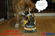 High quality pet food made in Canada: Nutrience Subzero Funny Animal Pictures, Dog Pictures, Funny Cats, Funny Animals, Raw Pet Food, Fun Events, Looking For Love, Your Best Friend, Dog Treats