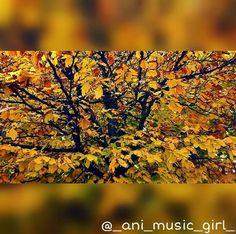 #orange #yellow #wood #forrest