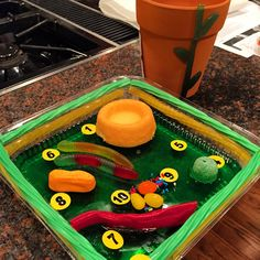 The plant cell model... 100 percent edible !