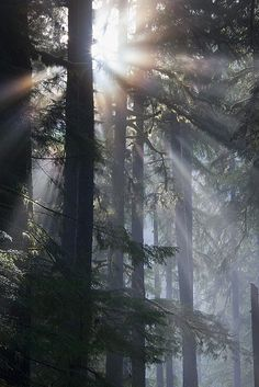 ...that quality of air that emanates from old trees, that so wonderfully changes and renews a weary spirit - RL Stevenson