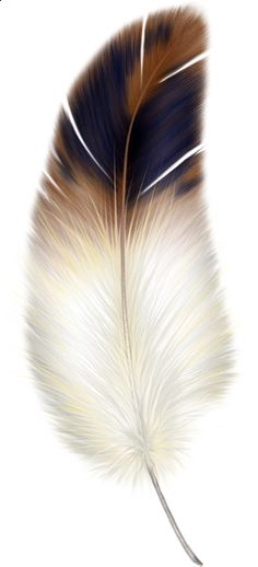 Beautiful Brown, Whites and cream feather Feather Painting, Feather Art, Feather Tattoos, Feather Drawing, Feather Design, Tatoos, White Feathers, Bird Feathers, Ruffled Feathers