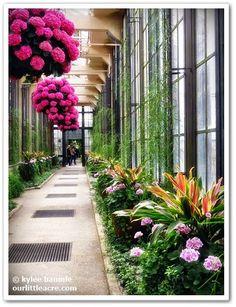 A Springtime Visit to Longwood Gardens