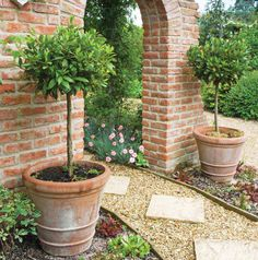 Potted Plants for Patio Use   Tesco Clubcard in association with Thompson & Morgan Tesco Clubcard ...
