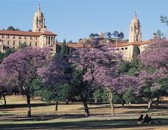 Jacaranda trees in Pretoria - South Africa South Africa Tours, Port Elizabeth, Kwazulu Natal, Kruger National Park, Pretoria, African Countries, African Animals, What A Wonderful World, Africa Travel