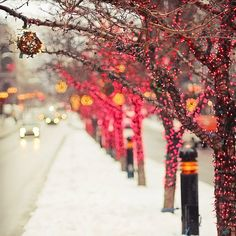 I wish it snowed here! I miss having an actual winter.