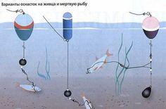 Да, рыбалка на щуку не так проста, как на других более мелких рыб. Это настоящий хищник, со своими повадками и распорядком дня. Чаще всего ловят щуку на живца с помощью поплавочной удочки с берега или с лодки.    Нужно заметить, что тактика при этом будет существенно отличаться. Прежде всего, разница будет в применяемых катушках: при ловле с берега это будут безынерционные варианты рыболовной снасти, а с лодки – инерционные. Хотя удилище при этом может быть и одинаковым – достаточно прочным… Carp Rigs, Pike Fishing, Boat, Decor, Fishing Tips, Fishing, Dinghy, Decoration, Boats