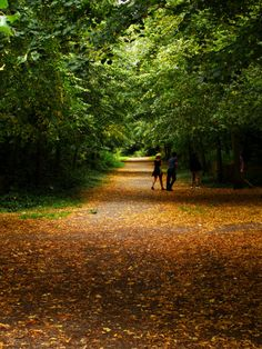 Holland Park, the most romantic and densely wooded of the multitude of London parks.