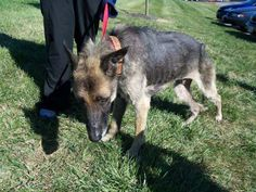 What One Man Did to This Dog is Sickening - But Then Angels Saved His Life