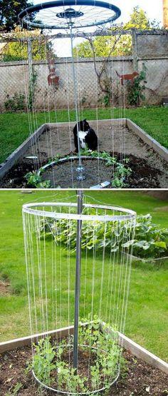 Make a Rim Trellis for Your Garden with a Couple of Bike Rims #Gardendesign
