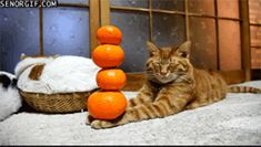 Orange you glad you're this relaxed? | The 16 Most Relaxing GIFS You'll See Today