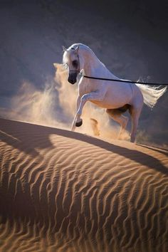 White Horse on the sands