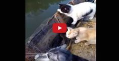 Man Takes His Cats Fishing With Him
