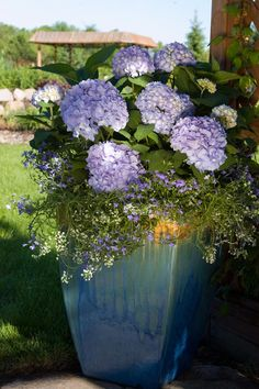 The hydrangeas that bloom all season long | Endless Summer® Collection Isn't this a pretty presentation in this ceramic pot? Hydrangea Potted, Potted Plants, Growing Hydrangea, Purple Hydrangeas, Hydrangea Care, Container Plants, Container Gardening, Container Flowers, Endless Summer Hydrangea