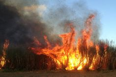 """The Dark Side of Paradise ~ they're burning cane fields this morning, and the air is filled with """"Black Snow"""" ~ gaggggg"""