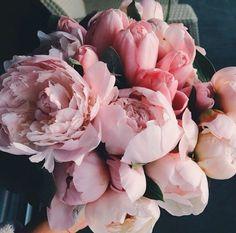 Peonies | Inspiration | Flowers | Indoor | Outdoor | Design | Cottage | Peonies