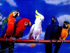 My favorite is the blue hyacinth macaw...