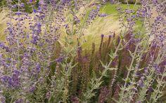 Perovskia 'Blue Spire', Salvia 'Ostfriesland' & Stipa tenuissima planting by Josh Chapman Garden Design http://joshchapman.co.uk