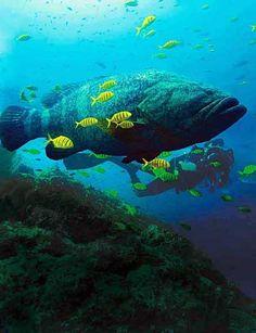Gorgona Subacuática