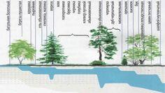 Hľadanie vody pomocou rastlín indikátorov   OZ Biosféra Herbs, Garden, Plants, Garten, Herb, Gardens, Planters, Tuin, Plant