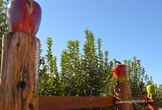 VISITING THE ORCHARD DURING AUTUMN'S APPLE FESTIVAL  -----  Apple Festival Orchard Fence | Learning By Kids | LearningByKids.com