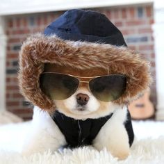Boo's ready for the snow.