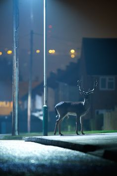 "magicalnaturetour: ""nightlife by Mark Bridger / 500px """