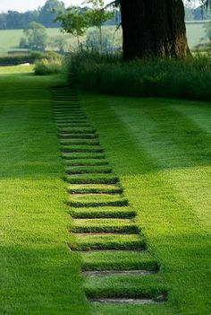lush path...would.love to walk barefoot on it!