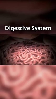 Digestion involves the breakdown of food into smaller and smalleYou can find Medical students and more on our website.Digestion i. Digestive System Anatomy, Human Digestive System, Human Body Systems, Medical Careers, Medical Science, Science Diy, Intestines Anatomy, Medicine Student, Human Body Anatomy