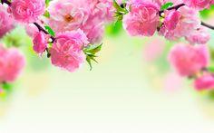 Картинки по запросу очень красивые цветы на рабочий стол