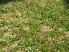 #GIARDINAGGIO COME ELIMINARE LE #ERBACCE  Spesso per eliminare le erbacce ricorriamo all'uso di sostanze chimiche ma se ci teniamo all'ambiente nel quale viviamo, dovremmo evitare di usare questi composti che inquinano altamente l'ambiente e che procurano del male a piccoli esseri viventi che sopravvivono nel loro habitat naturale.. http://www.giardinaggio.it/giardinaggio/tecniche-di-giardinaggio/eliminare-erbacce.asp