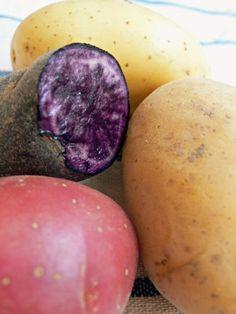 Pommes de terre, variétés, patate