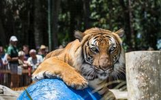 Much more than a walk-thru zoo, this historic tropical garden with mature botanicals and nationally accredited zoo features a full day of wildlife experience. Naples Zoo, Florida Travel, Tropical Garden, Wildlife, Homes, Animals, Houses, Animales, Animaux