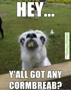 29 Funny Random Pictures lol so Hilarious – Funny Memes, Funny Jokes! Funny Animal Memes, Funny Animal Pictures, Funny Animals, Funny Jokes, Cute Animals, Funny Llama, Funniest Memes, Animal Pics, Animal Captions