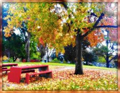 Autumn In The Park. October 2014