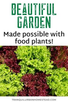 When you first start to grow food, it may seem a bit dull compared to growing only flowers. However you can still have a beautiful garden even with edible plants. Grow Food, Grow Your Own Food, Edible Plants, Edible Flowers, Garden Inspiration, Garden Ideas, Backyard Layout, Stone Planters, Garden Maintenance