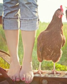 Henrietta kept Fern company while Charlotte spoke with all the Farm animals