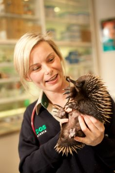 Did you know that the Echidna species and the Platypus are the only animals in the Monotremata order: mammals that lay eggs?