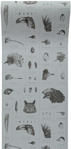 """The study of birds in natural history museums is the inspiration behind Paige's Ornithology wallpaper design. The wallpaper showcases a collection of beautifully detailed hand drawn illustrations of different birds, . Different Birds, Natural History Museum, Bird Wallpaper, Designer Wallpaper, Beautiful Birds, Textile Design, Art Projects, How To Draw Hands, Museums"