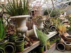 Garden Visit № 2 {rolling greens} - Amanda Karam